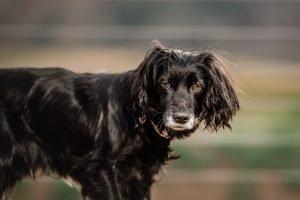 fotografia de perros